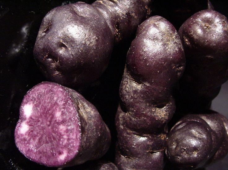 Tūtaekurī - IMAGE. Tūtaekurī cultivars are long, with purple skin and flesh. The name suggests what the ancestors, who named this cultivar, thought the tubers looked like – dog poo!