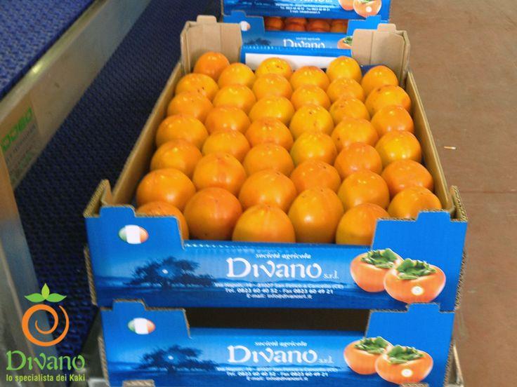 Rojo brillante persimmons produced in Italy. www.divanosrl.it/en #kakidivano #soledautunno