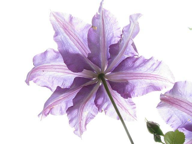 Free Photo: Flower, Nature, Flora, Garden - Free Image on Pixabay - 123766