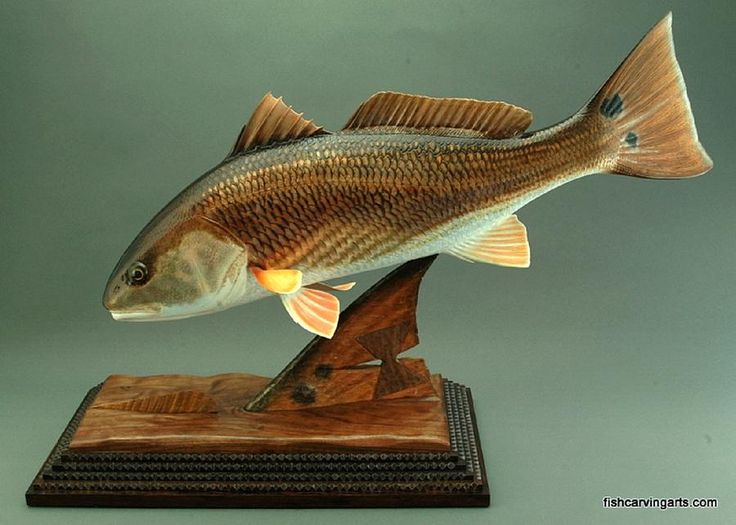 806 best images about trearbeider carved wood on for Fish native to florida