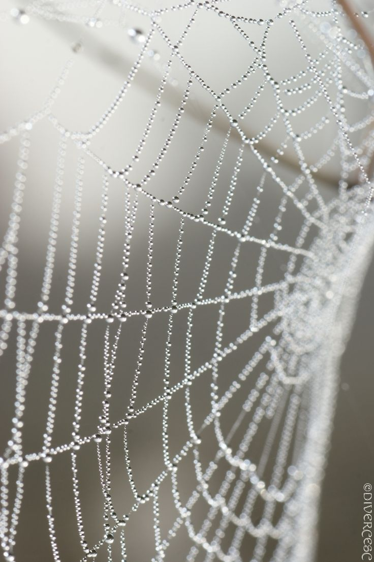 123 best NATURE - Beautiful Spider Webs images on Pinterest ...