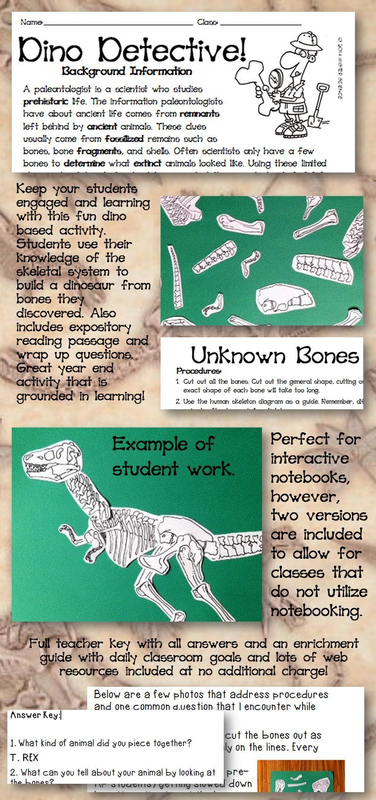 25+ best ideas about Skeletal system activities on Pinterest ...
