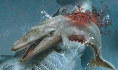 Qual foi o maior tubarão que já existiu?