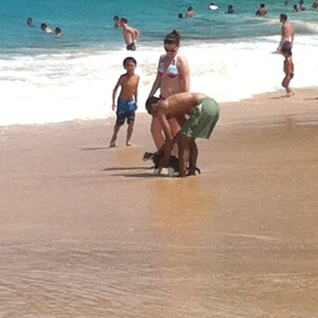 Some random guy brought his cat to the beach!! Awesome!