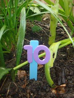 Here's a great outdoor activity for the kids - a NUMBER HUNT! Stick foam numbers (or simply write) onto plastic garden label sticks. Hide the sticks in the garden and then send the kids outdoors to find them. Once found, ask them to line up the sticks in the correct order.