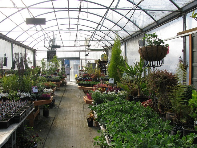 The Greenhouse Nursery-Port Angeles,WA.