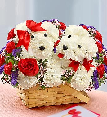 We've taken our truly original a-DOG-able® arrangement and added a litter mate. Both are hand-crafted in a handled basket from fresh white carnations, red roses, carnations, statice and waxflower and accented with red bows with sparkling rhinestones.