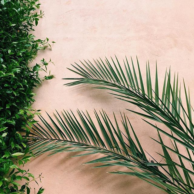 Palm Leaf Inspiration // @vagabondcompany