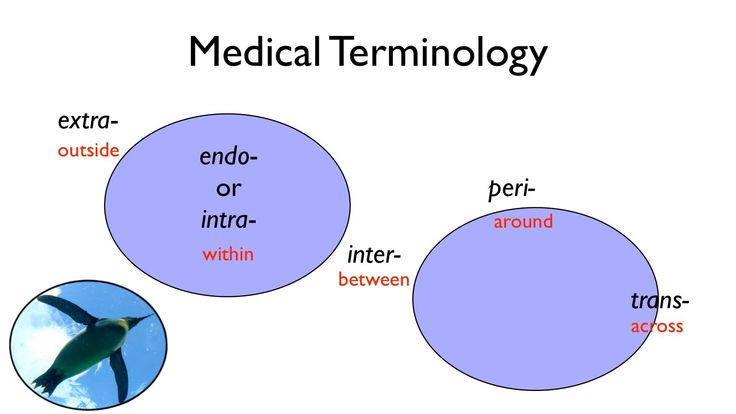 medical terminology in college subjects help write essay online