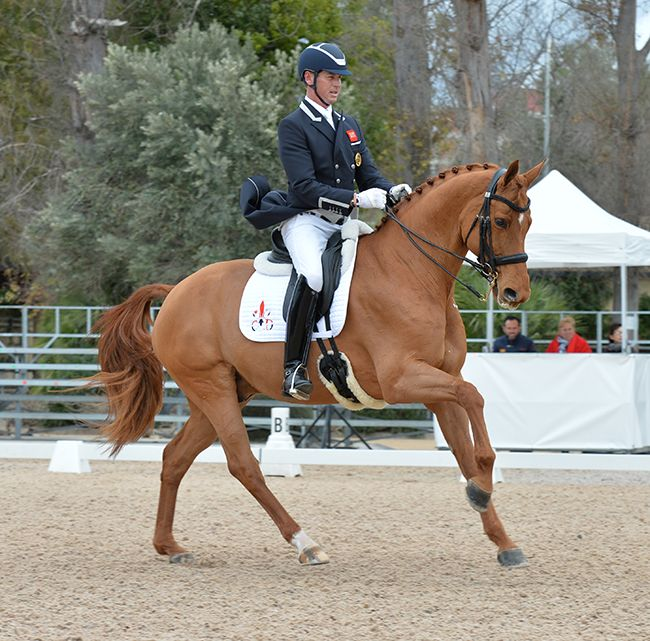 Talking Dressage with Carl Hester | The Horse Magazine – Australia's Leading Equestrian Magazine