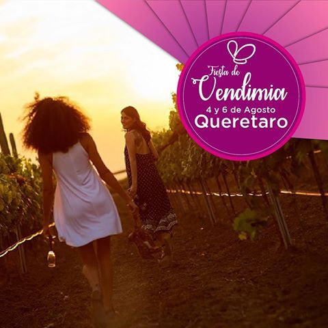 """Del 4 al 6 de #Agosto se llevará acabo la famosa #FiestaDeLaVendimia 🍇 en #Querétaro. """"Vive la magia de de pisar la uva como en la antigüedad""""  #ExperienciasPorVivir #ExperienciasImviatori . . .  #viajeros #México #mexico_maravilloso #travelphotography #igtravel #travelingram #traveller #instatraveling #mytravelgam #instapassport #visiting #vino #wine #vendimia #uvas #viñedos"""