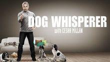 Dog Whisperer - Episodes