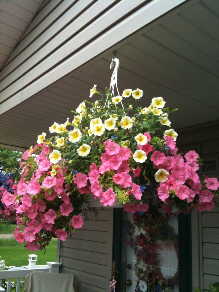 Hanging Petunia Basket Pretty Petunias Pinterest