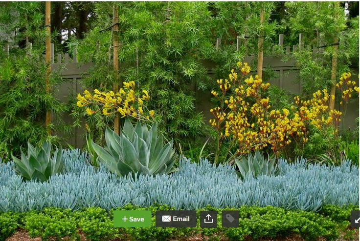 Use green dodonaea hopseed, yellow kangaroo paw, foxtail agave, chalk sticks, and whatever the dark green plant is in the front, for flower bed alongside tennis court.