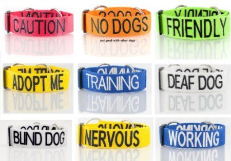 Awesome leashes- Caution, No Dogs, Friendly, Adopt Me ...
