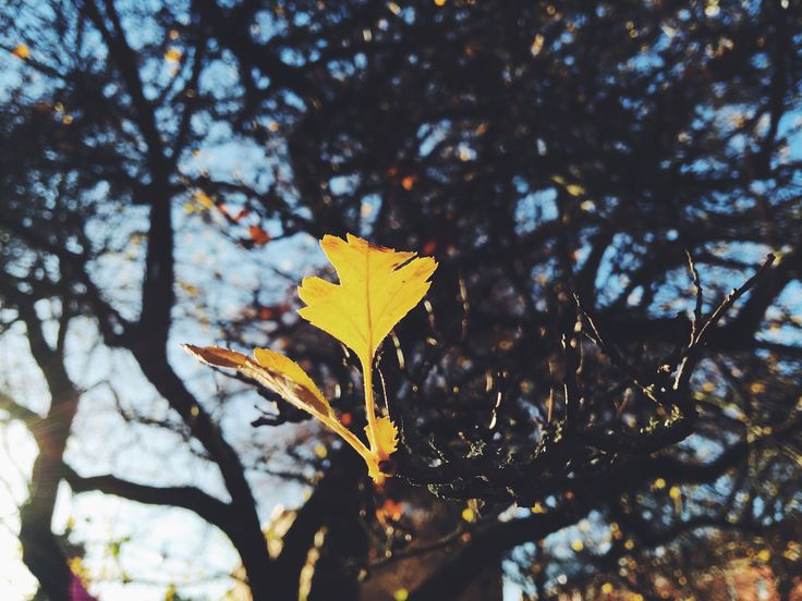Autumn's theme: Intentions