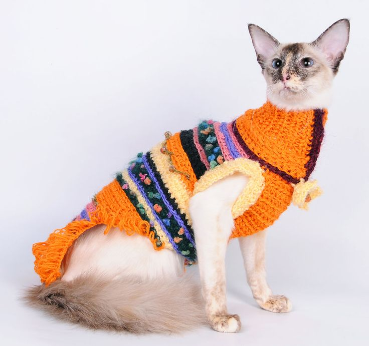 Crochet clothes for a cat. Cute knitting and crocheting. Вязаная одежда для вашего питомца