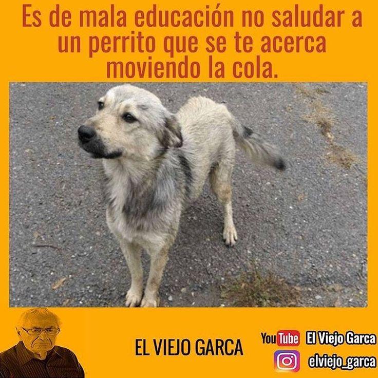 """82.7 mil Me gusta, 186 comentarios - El Viejo Garca (@elviejo_garca) en Instagram: """"Es de mala educación! #elviejogarca #diadelanimal"""""""