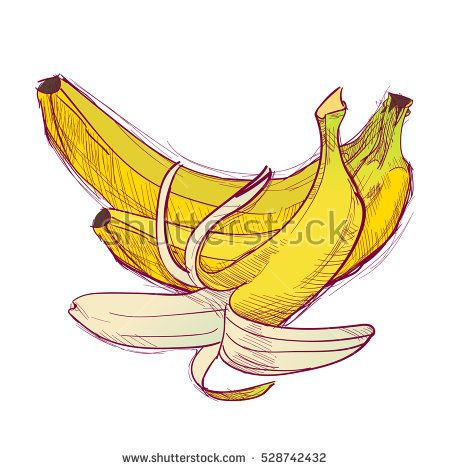 Bananas are hand-drawn. Vector color illustration of the fruit.