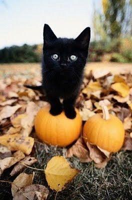 восхитительно, животное, животные, осень, детка, красота, чёрный, кот, кошки, мило, милашка, глаза, падение, хэллоуин, котя, котята, кошечки, котенок, листья, любовь, оранжевый, идеально, приятное, тыква