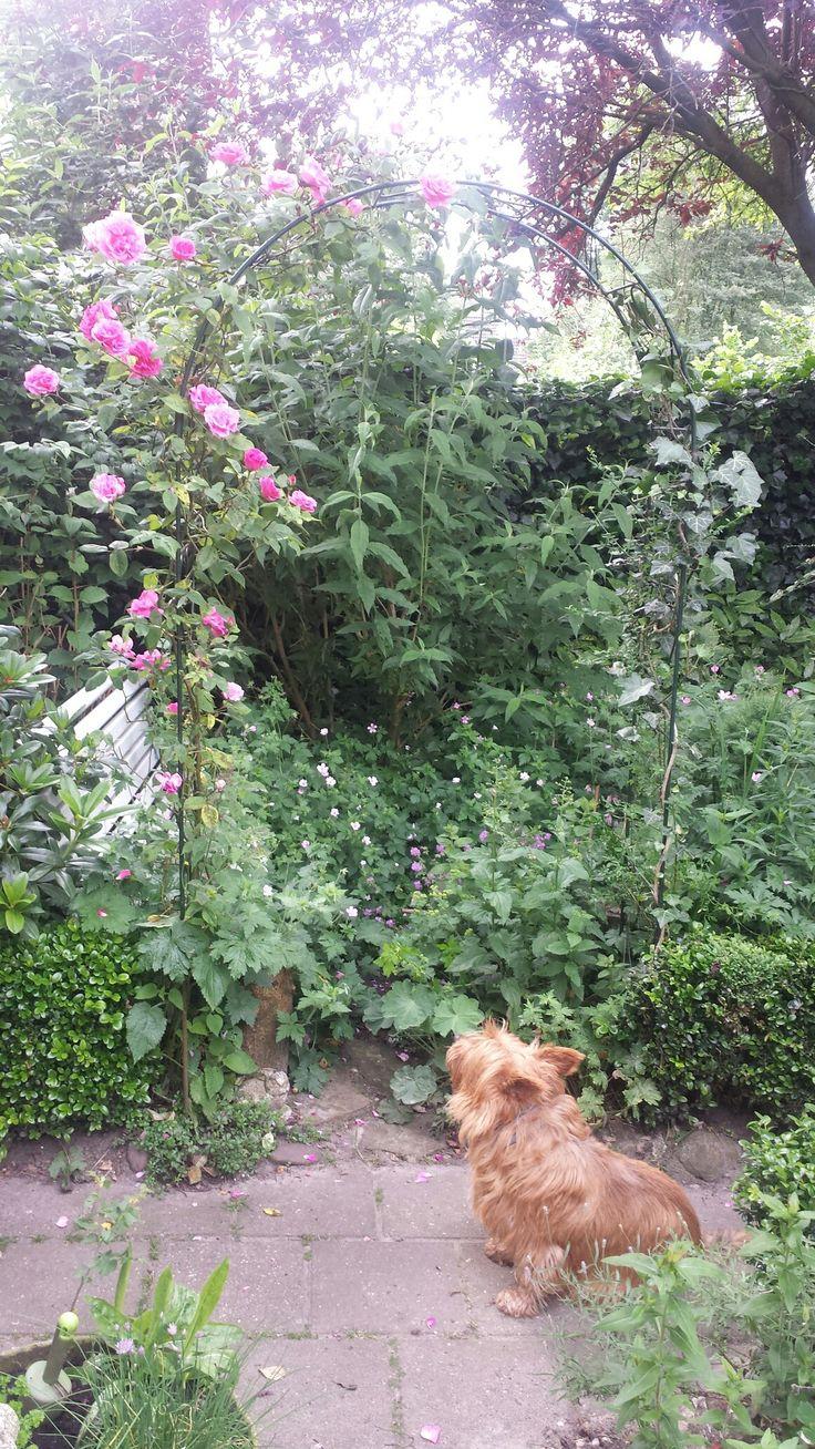 Heerlijk hoekje in de tuin  bomvol met planten maar weldadig om te zitten. Met de Australische terriër o.a. 2016