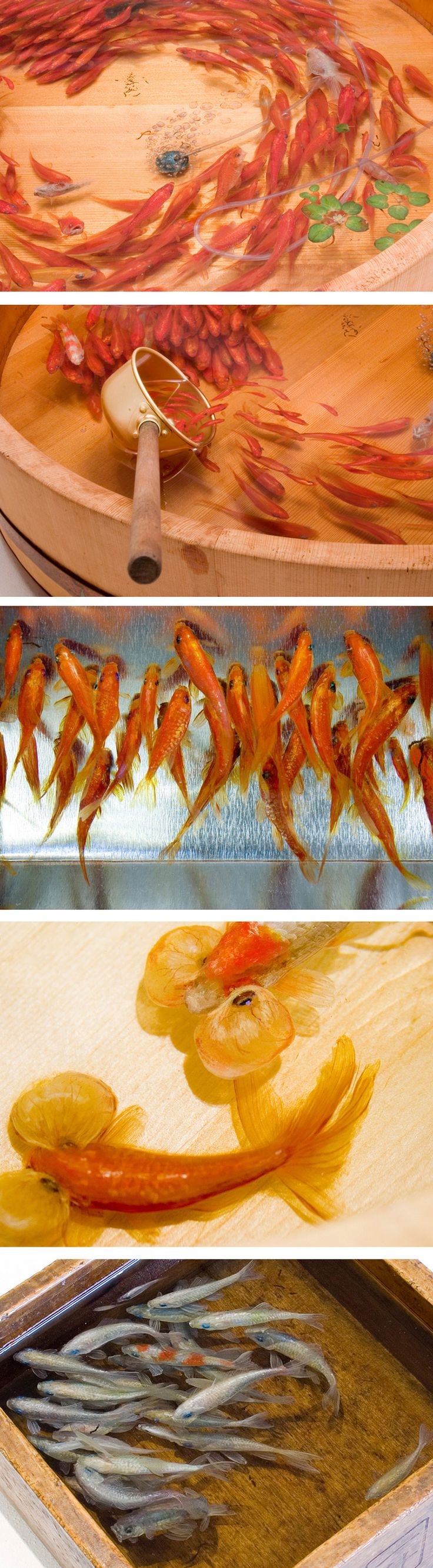 o trabalho do artista japonês Riusuke Fukahori, que mistura pintura e escultura, através de uma complexa técnica na qual ele alterna camadas de tinta e camadas de uma resina transparente, que, uma vez seca, fica com uma aparência de água. O trabalho foi exposto na ICN gallery, em Londres, com a exposição Goldfish Salvation.