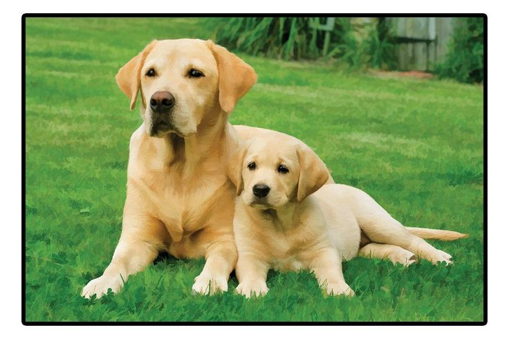 Yellow Labrador Retrievers Doormat