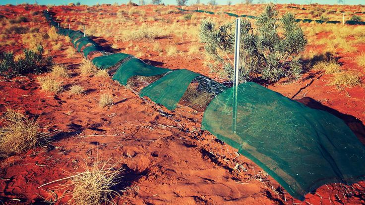 How can some simple chicken wire save the lives of thousands of small native animals in Australia's Simpson Desert? Well, it's now being used by scientists to protect them from all the feral animals trying to turn them into dinner.