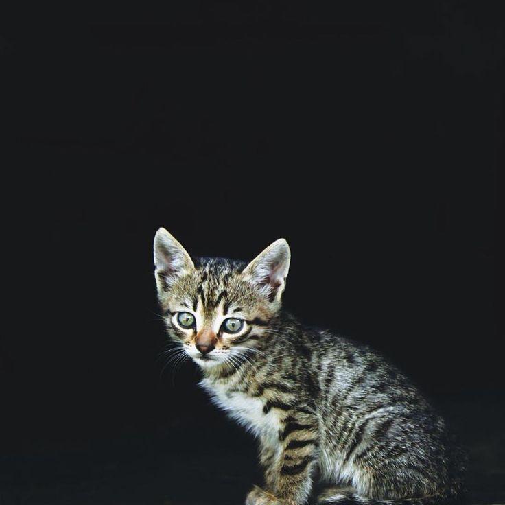 #cat #catsofinstagram  #vsco #vscocam