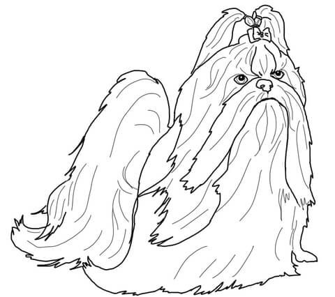 Shih Tzu in Show Coat coloring page from Dogs category. Select from 25423 printable crafts of cartoons, nature, animals, Bible and many more.