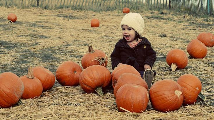 View the map to find a location of a pumpkin patch in your area.