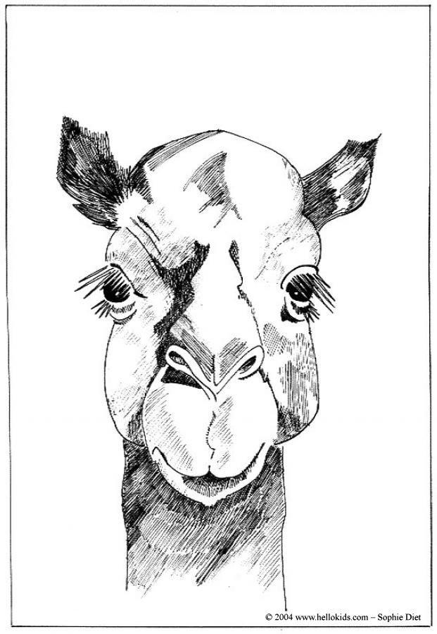 100 besten Wild Animals Coloring Pages Bilder auf Pinterest