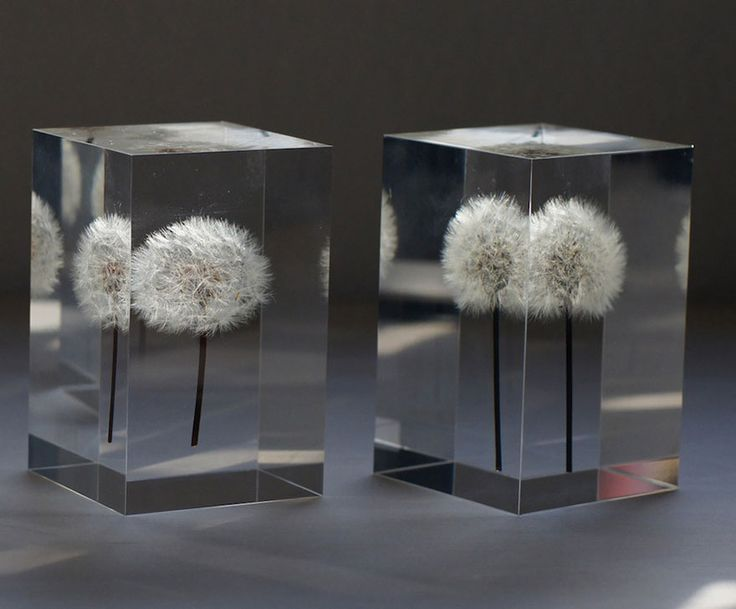 Japanese cinematographer Takao Inoue has created a magical light thats a shining dandelion flower frozen in time. How he does it wirh those delicate flowers & puts a light tube into the stem is beyond me.