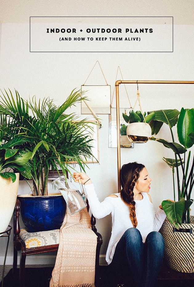 indoor and outdoor plant guide (and how to keep them alive)