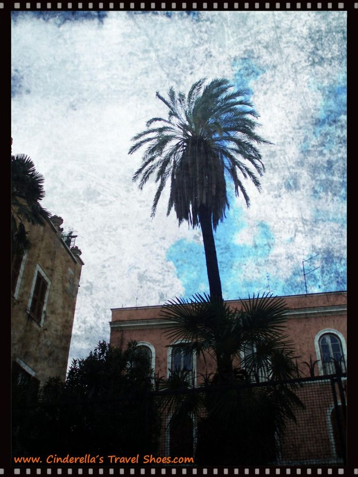 The Palm in Rome, Italy