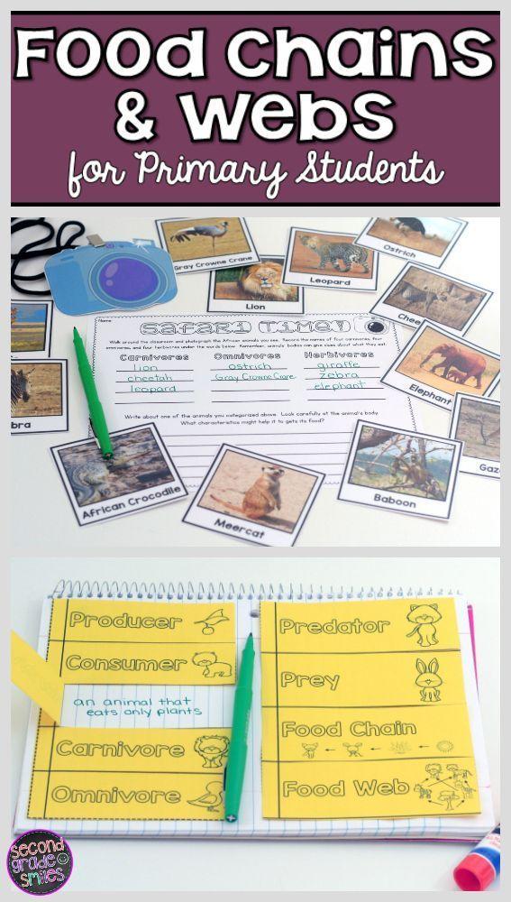 Food Chains & Food Webs Teaching second grade, Teaching