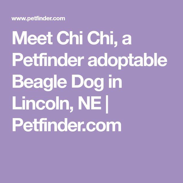 Meet Chi Chi, a Petfinder adoptable Beagle Dog in Lincoln, NE | Petfinder.com