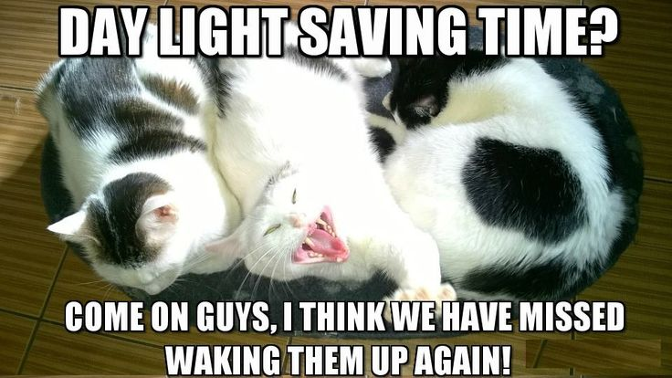Day Light Saving Time