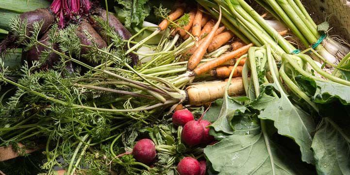 Cocina eco mediterranea sofisticada gastronomia a base de productos ecologicos hostal empuries