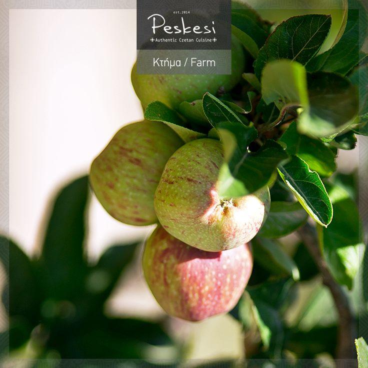Το μήλο κάτω από τη μηλιά θα πέσει; Ναι! Αλλά θα καταλήξει στο #Peskesi! Φυσικό επακόλουθο, καθώς τα φρούτα, όπως και τα λαχανικά, αποτελούν τη δεύτερη βάση της διατροφικής πυραμίδας της μεσογειακής διατροφής. Απαραίτητα στην κουζίνα αλλά και στην υγεία μας!