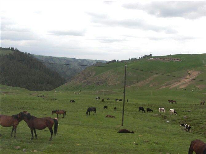 North Xinjiang 08