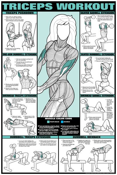 Tricep Workout Poster - Laminated in Fitness Charts