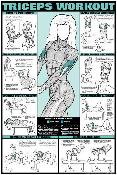 Tríceps exercícios mulher