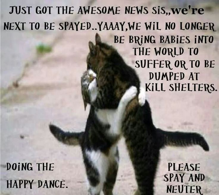 Burleson Animal Shelter Cats