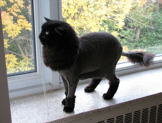 15 Best Cat Grooming Images On Pinterest Kitty Cats Kittens And Pets