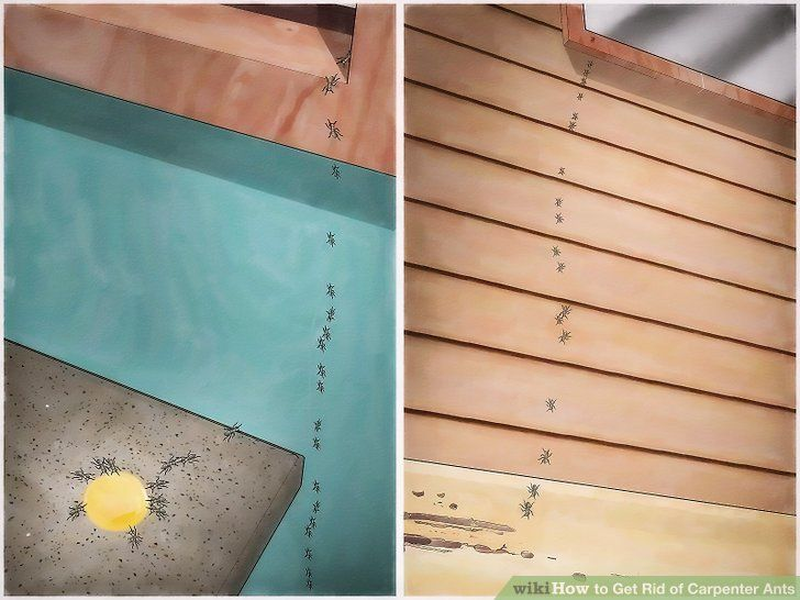 How To Get Rid Of Carpenter Ants In 2020 Carpenter Ant Woodworking Projects Plans Kill Carpenter Ants