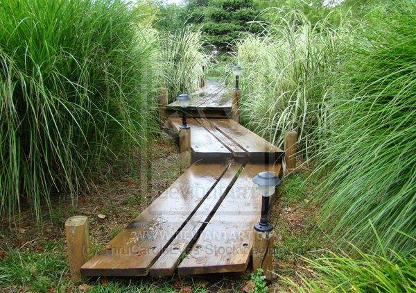 Home And Garden : Wooden Walkways for Gardens