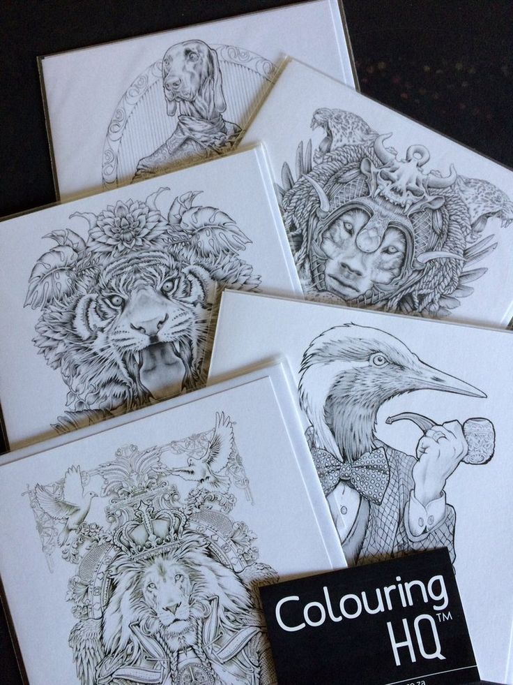 How about this tantalising Tuesday special? Take a look at Bennett's Gorgeous Guys combo, we've made it easy so you don't have to choose; 5 beautiful designs from his Colour My Sketchbook series: Poncy Pooch, Lord Heron, Canthis Panthera, Lion King & Bush Bengal. You get to have all 5 cards for the price of 4 cards. https://colouring-hq.myshopify.com/products/colouring-card-bennetts-gorgeous-guys-combo-5-for-4