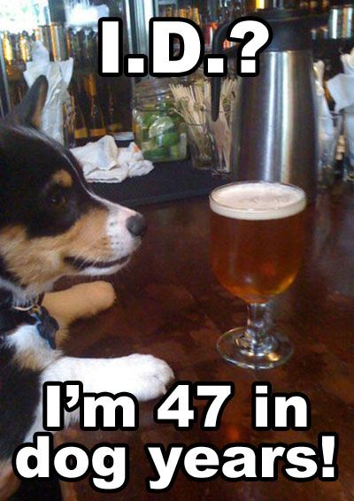 corgi!Happy Hour, Parties Animal, Friends, S'Mores Bar, Dogs Years, Funny Stuff, Dogs Drinks Beer, Corgis Life, Funny Memes