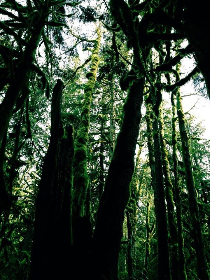 Rainforest - Chilliwack, BC Canada Photo by: Danielle Yaghdjian